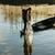 dob · halászháló · halász · citromsárga · hal · naplemente - stock fotó © xuanhuongho