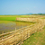 vietnamese rural paddy field bamboo fence stock photo © xuanhuongho