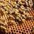 pszczół · ul · drzewo · Indie · Pszczoła - zdjęcia stock © xuanhuongho