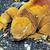 grond · leguaan · eiland · dier · biologie - stockfoto © xura