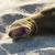 oroszlánfóka · pihen · nap · tengerpart · tenger · óceán - stock fotó © xura
