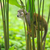 squirrel monkey in amazon rainforest stock photo © xura