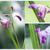 bella · viola · orchidea · floreale · buio · orchidee - foto d'archivio © xura
