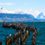 king cormorant colony old dock puerto natales chile stock photo © xura