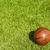 dirty small basketball on the grass   stock photo © yanukit