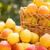 pera · sidra · peras · verano · jardín · picnic - foto stock © yaruta