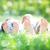 家族 · コラージュ · ビーチ - ストックフォト © yaruta