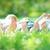 family lying on green grass stock photo © yaruta