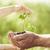 edad · jóvenes · manos · nuevos · planta · ambiental - foto stock © yaruta