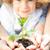 young green plant stock photo © yaruta