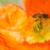 kolibrie · vliegen · bloem · oranje · natuur · mier - stockfoto © yhelfman