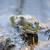 vergadering · moeras · wachten · buit · kikker · dier - stockfoto © yhelfman
