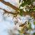 cedro · albero · uccello · colore · naturale · orizzontale - foto d'archivio © yhelfman