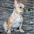 french bulldog   canis lupus familiaris 6 months old portrait stock photo © yhelfman