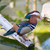 mandarin duck aix galericulata male stock photo © yhelfman