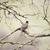 american robin turdus migratorius perched on a tree stock photo © yhelfman