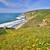 océan · point · sentier · printemps · fleurs · sauvages - photo stock © yhelfman