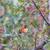 kolibri · ág · színes · kép · északi · Kalifornia · USA - stock fotó © yhelfman