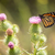 pillangó · virág · színes · ül · kamilla · virágok - stock fotó © yhelfman