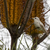 ハチドリ · 男性 · 暗い · 緑 · 鳥 - ストックフォト © yhelfman