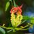 mászik · liliom · virág · látványos · piros · sárga · virágok - stock fotó © Yongkiet