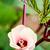 Jamaica · afbeelding · gerenderd · gebruikt · grafisch · ontwerp - stockfoto © yongkiet