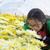 blanco · crisantemo · flores · jardín · montana · luz - foto stock © yongkiet