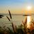 view · bella · lago · tramonto · punto - foto d'archivio © Yongkiet