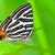 葉 · アフリカ · 昆虫 · アフリカ - ストックフォト © yongkiet