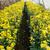 温室 · トマト · 家 · フルーツ · 庭園 - ストックフォト © yongkiet