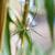 pók · zsákmány · kert · net · szemek · tigris - stock fotó © yongkiet