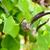 экзотический · цветок · подобно · куриные · зеленый - Сток-фото © Yongkiet