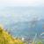 Flower grass on the mountain stock photo © Yongkiet