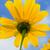мексиканских · подсолнечника · небе · цветок · текстуры · пейзаж - Сток-фото © yongkiet
