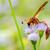 vespa · piccolo · fiore · africa - foto d'archivio © yongkiet