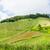 norte · Tailândia · belo · paisagem · arroz - foto stock © yongkiet