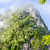 mattina · nebbia · coprire · montagna · Thailandia · albero - foto d'archivio © yongkiet