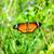 虎 · 蝶 · 赤 · 花 · 公共 · 公園 - ストックフォト © yongkiet