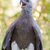 peces · águila · retrato · naturaleza · aves · África - foto stock © yongkiet