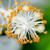 beyaz · ebegümeci · çiçekler · kar · tanesi · doğa - stok fotoğraf © Yongkiet