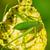 グラスホッパー · 茂み · 庭園 · 草 · 自然 · 葉 - ストックフォト © yongkiet
