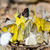 renkli · kelebek · 3d · illustration · soyut · moda · dizayn - stok fotoğraf © yongkiet