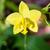terra · orchidea · fiore · bella · fiore · giallo · albero - foto d'archivio © Yongkiet