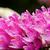 fogkefe · közelkép · víz · gyöngyök · virágok · száj - stock fotó © yongkiet