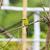 kicsi · méh · madár · Afrika · természetes - stock fotó © yongkiet