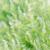 pequeño · hojas · verdes · naturales · espárragos · jardín · campo - foto stock © Yongkiet
