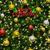 светимость · рождество · красный · мяча · изолированный · аннотация - Сток-фото © yongkiet