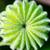 fruto · sementes · topo · exótico · forma - foto stock © Yongkiet