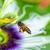 ape · macro · raccolta · polline · fioritura · primavera - foto d'archivio © yongkiet