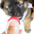 bebé · perros · comer · leche · negro · marrón - foto stock © Yongkiet